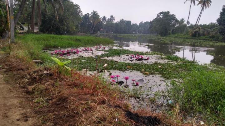 12 Backwater Kumarkom