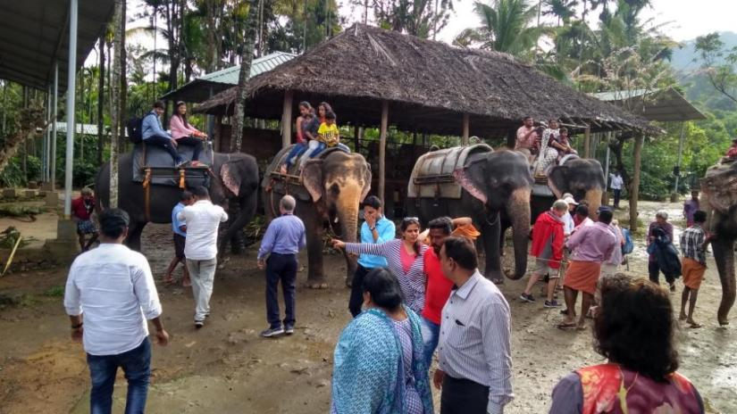 22 Elephant Thekkedy