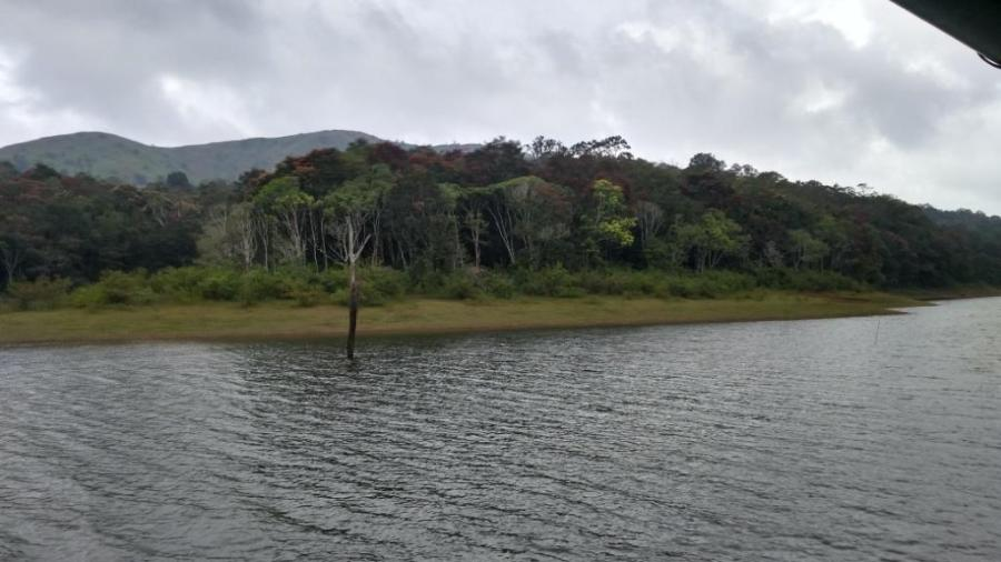 24 Periyar Wildlife Jungle