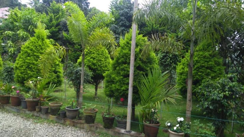 31 Homestay garden Munnar
