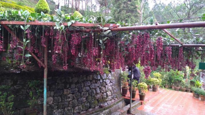34 Rose Garden Munnar