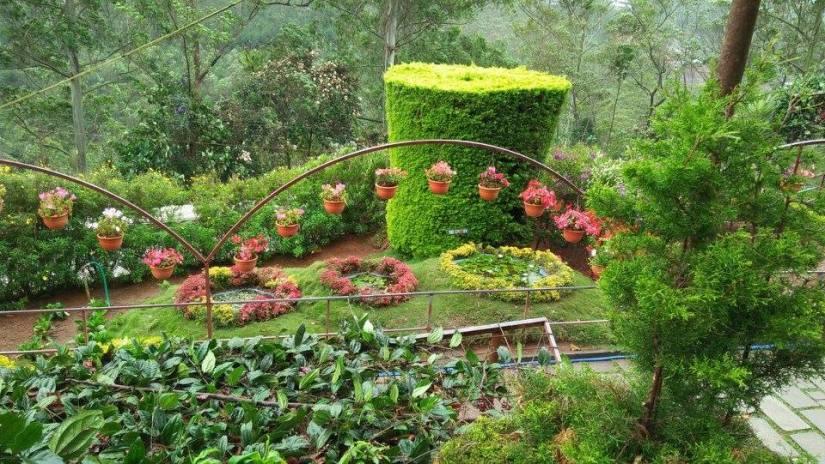 35 Munnar Rose Garden 1