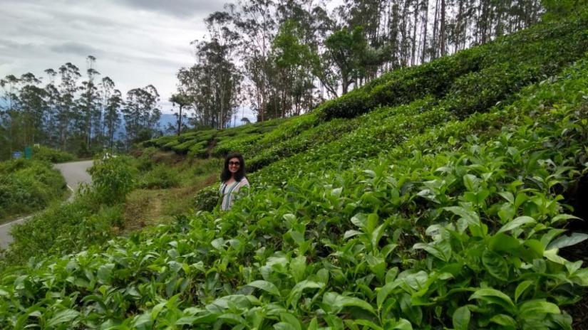 37 Tea Garden Munnar
