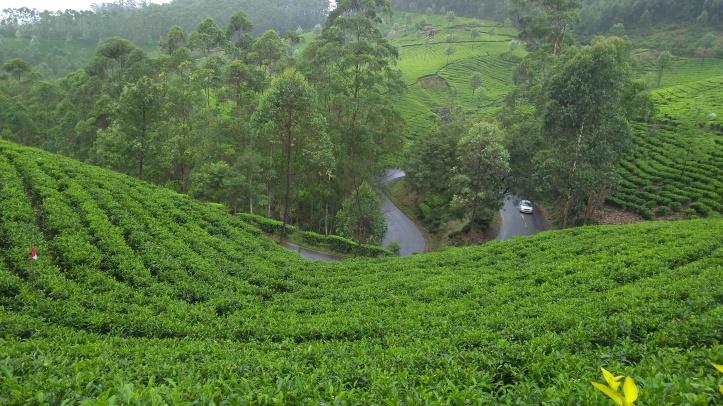 38 View from tea garden munnar