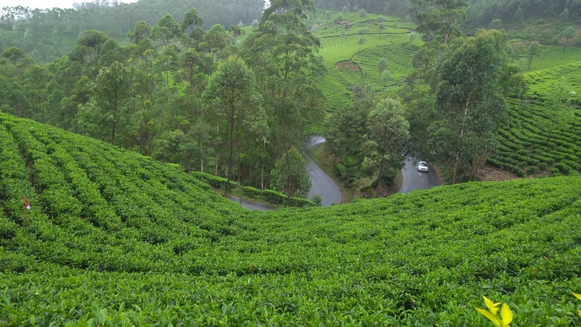 38 View from tea garden munnar