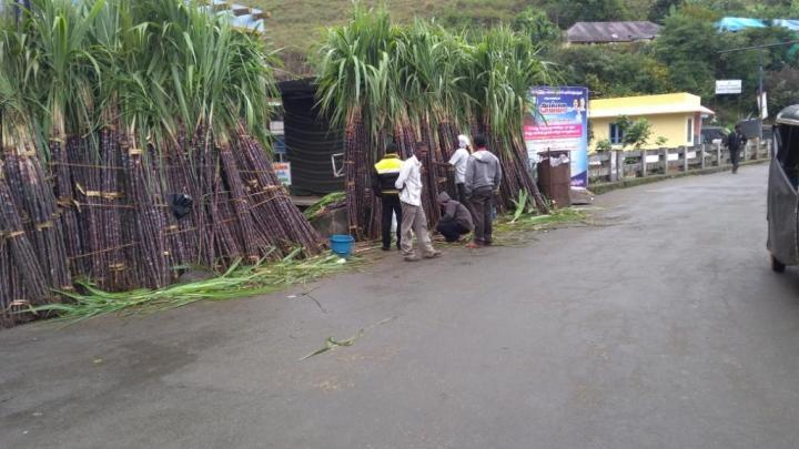 40 Sugarcane