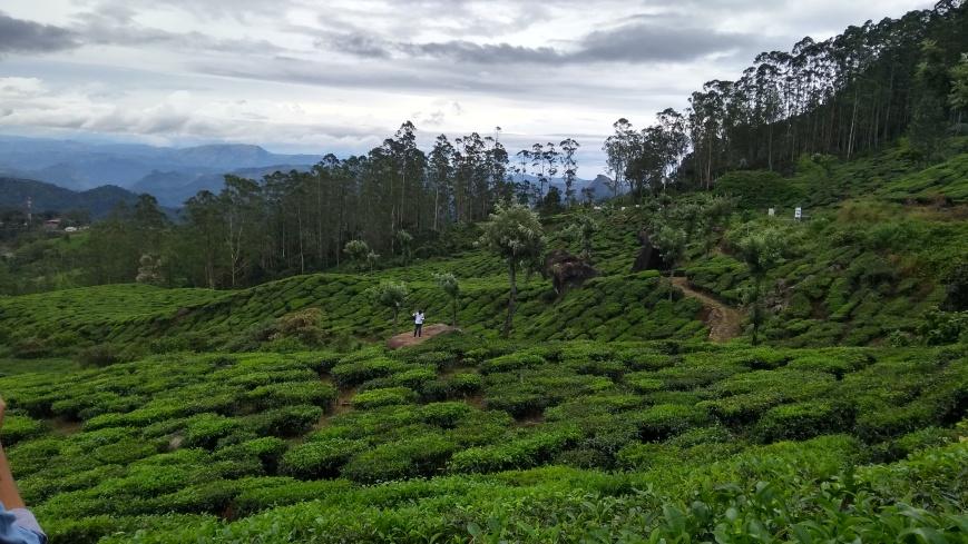 Health Benefits Green Tea