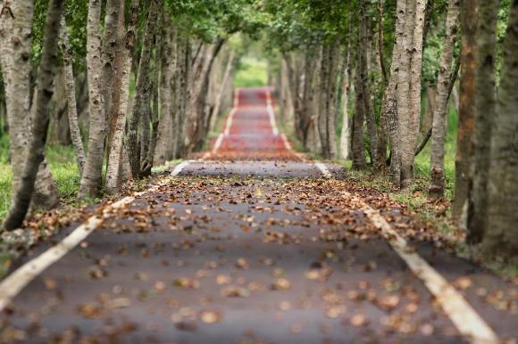 Safer Path